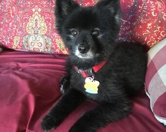 Liste de réserve ~ Pet souvenir ~ 2 breloques personnalisés ~ chien charmes ~ animaux Memento