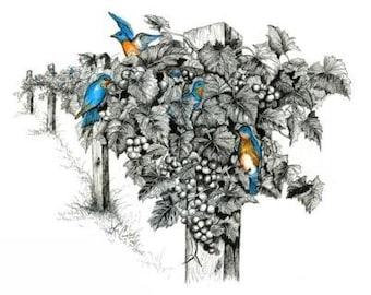 "Blue Bird, Bluebird, Blackwater Vineyard, vineyard, Baker Miller, Treasure, Pen & Ink, ""Baker's Treasure"" (Reproduction)"