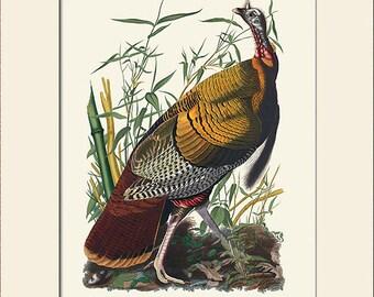 Audubon Bird Art Print, Wild Turkey, New Matted Art Print, Note Card, Wall Decor, Natural History, Vintage Bird Illustration, Wall Art