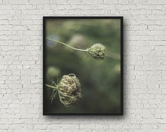 Queen Anne's Lace Print / Digital Download / Fine Art Print/ Wall Art / Home Decor / Color Photograph / Nature Photography / Flower Print