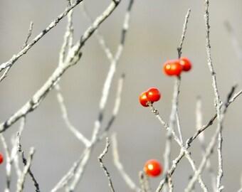 Red Berries Photo Print