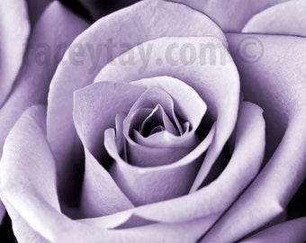 Purple Flower Photography, Rose, Nature Photography