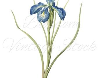 Blue Flower Vintage Prints - Blue Flower Clipart Digital Image for Printing, Artwork, Collage INSTANT DOWNLOAD -1072