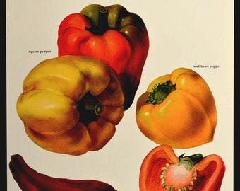 Pepper Print Kitchen Wall Decor Art Vegetable Peppers Food