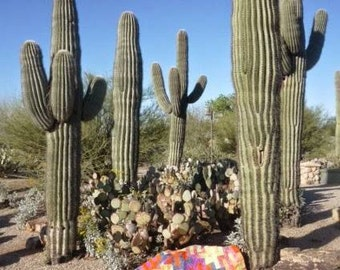 PDF Saguaro Sunset Quilt Pattern