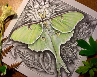 Luna (Drawing of a Luna moth on night blooming Cereus)