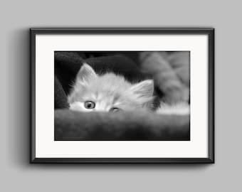 Kitten Print,Photography Wall Art,Peekaboo Art,Minimalist Print,Minimalist Art,Kitten Photography,Animal Print,Modern Art,Cat Photography