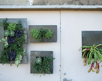 Vertical Garden 3 Plant Placement Galvanized Steel Wall Planter