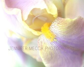 Photograph - Blooming Purple Violet Iris Petal Flower Garden Child Baby Nursery Home Decor Fine Art Photography Print Wall Art Home Decor