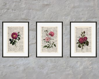 Prints set of 3 - rose - Antiquarian Book page