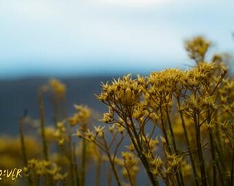 Colorado flowers nature photo print