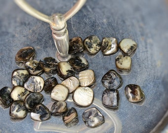 Gorgeous Shell Beads