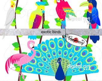 Exotic Birds: Clip Art Pack (300 dpi transparent png) Cockatoo Peacock Flamengo Toucan Macaw Exotic Bird Clipart Digital Clip Art Colorful