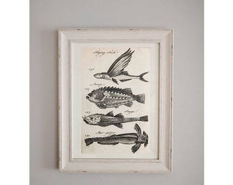 1700's Flying Fish Poster // Natural History Journal // Wall Art
