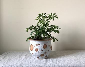 Polka dot planter