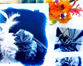 Bee Note Card Set of Three - Cyanotype Blank Cards with Bees, Bee Greeting Cards