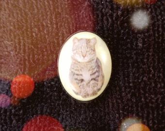 Cat's Meow!