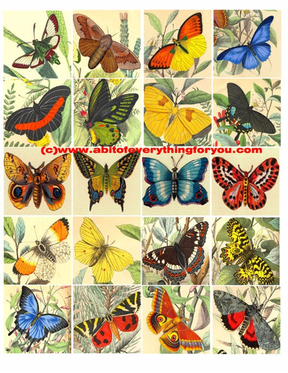 """butterfly bug insect vintage clip art digital download collage sheet 2"""" inch squares graphics images craft printables"""