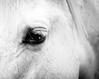 horse art horse decor Black white horse photography horse wall art black white horse print nature photography fine art country home decor