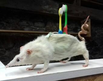 Taxidermy Rat Pencil Case