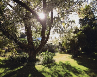 Garden Digital Download , Gorgeous Trees, Greenery, Historical, Nature PDF, Sunshine