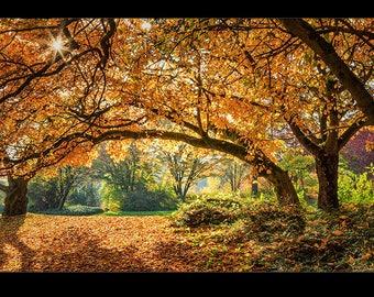 Queen Elizabeth Park, Vancouver, Canada