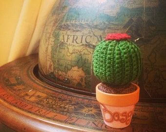 Mini Cactus Rita