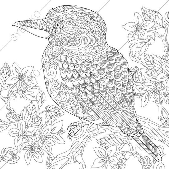 Kookaburra Bird Australian Kingfisher Coloring Pages Animal