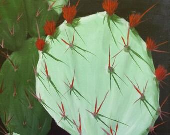 Cactus Flower, Phoenix Botanical Gardens