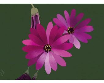 Flower Greeting Card, Blank, Dimorphotheca Design No 6021