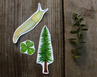 Redwood Forest Stickers: Three Vinyl Stickers, Coastal Redwood, Banana Slug, Redwood Sorrel