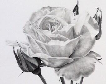 Rose in graphite