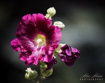 Magenta Floral Print, Purple flowers, Fine Art Print purple floral photography wall art home decor purple flower print vibrant color photo