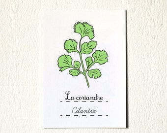 Green Home Decor Eco  - kitchen Art - herbs art print 5 x 7 Cilantro Green gift for a foodie for her Plant Gardener