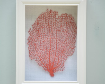 Genuine Sea Fan Shadow Box, Coral