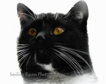 To the Moon - PHOTO PRINT - Cat / Kitten, Black and White / Tuxedo Cat Portrait