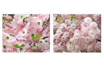 Set of 2 Flower Photographs - Pink Cherry Blossoms - Pink Dogwood Flower - Pink Flower Wall Decor - Pink Spring - Flower - Nature Photograph