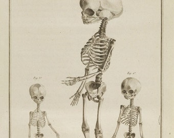 antique french anatomical print three fetal skeletons illustration DIGITAL DOWNLOAD
