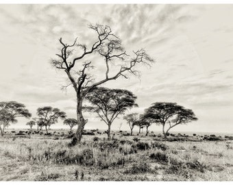 Landscape, nature, wall art, photography print, art print, framed photographs