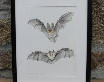 Bats - Long Eared & Greater Horseshoe. Original hand painted watercolour