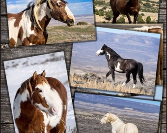 Wild Horse Postcards - Sand Wash Basin Mustangs Collectible Photo Cards, Picasso, Corona, Benson, Yahtzee,  Storm, Shock Top, Coal, Blazer
