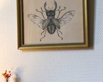 Framed drawing, insect: stag beetle (lucanus cervus).