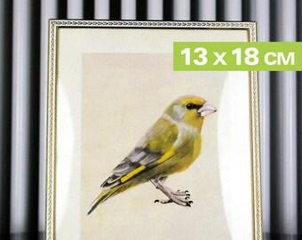 Mini-Kunstdruck, Vogel, Grünfink, 12,6x17,9cm, 300 g