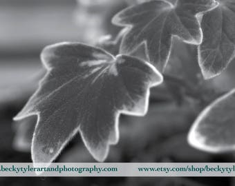 Textured Leaves Macro Fine Art Photo Print