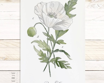Poppy Study - Watercolor Botanical wall hanging, wood trim art. Scientific Canvas Posters Chart Vol.2 More Options