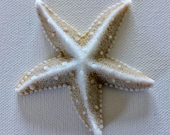 Realistic Starfish Soap -  Beach, Soap, Nautical, Beach Wedding, Wedding Favors, Beach Theme, Guest Soap, Starfish, Custom Orders