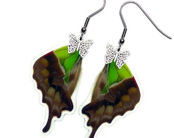 Real Butterfly Wing Earrings  (Graphium Weiskei Hindwing - E159)