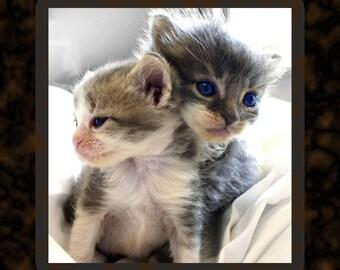 Soft Kitties, Warm Kitties, Little Balls of Fur