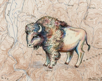 "Bison art on topography map, 8"" x 10"" Archival print, wildlife illustration, animal print, wall art American Bison illustration, buffalo art"