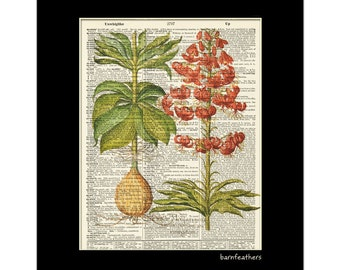 Vintage Dictionary Art Print - LILY FLOWERS - Dictionary Page - Book Art Print  - Home Decor No. P136